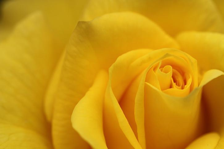 2012.05.12・『 花の文化園・薔薇 』 大阪府 河内長野市 08