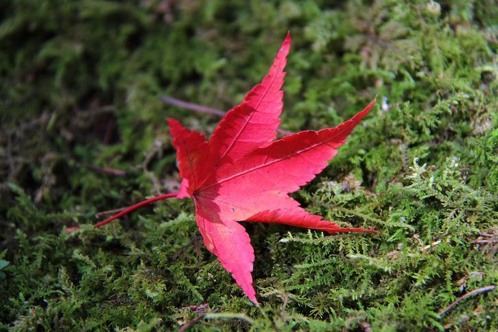 2012.11.12・『 赤山禅院 』京都 06