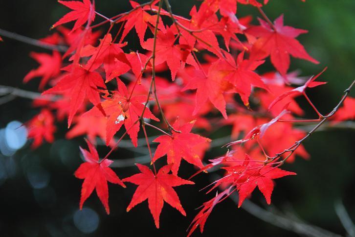 2012.11.12・『 赤山禅院 』京都 05