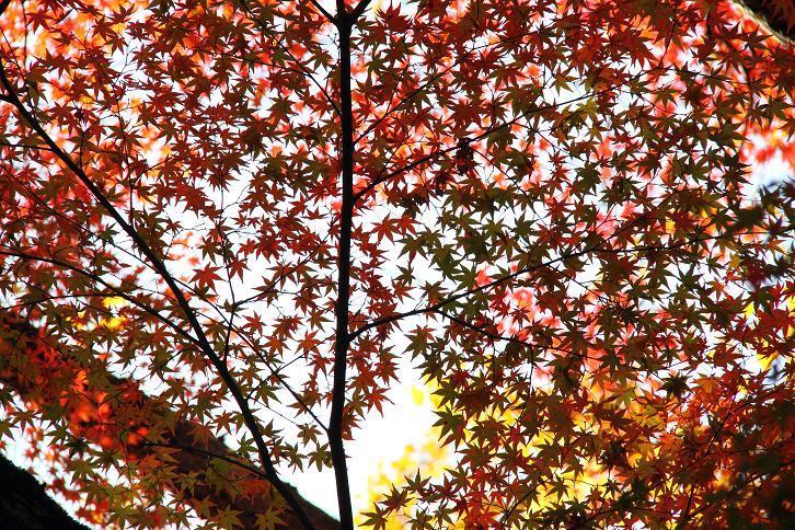 2012.11.12・『 赤山禅院 』京都 04