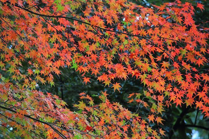 2012.11.12・『 赤山禅院 』京都 03