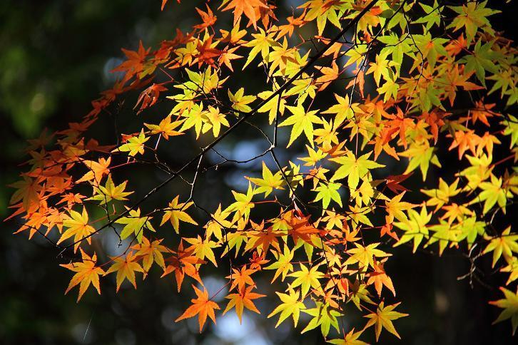 2012.11.12・『 赤山禅院 』京都 02