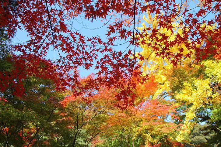2012.11.12・『 蓮華寺 』京都 05