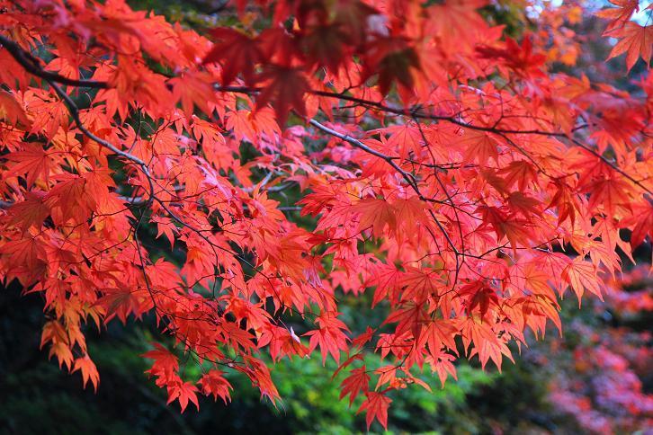 2012.11.12・『 詩仙堂 』京都 06