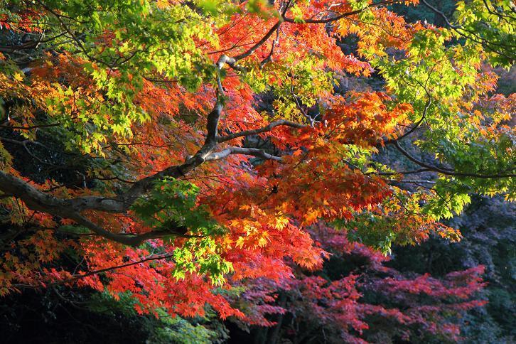 2012.11.12・『 詩仙堂 』京都 05