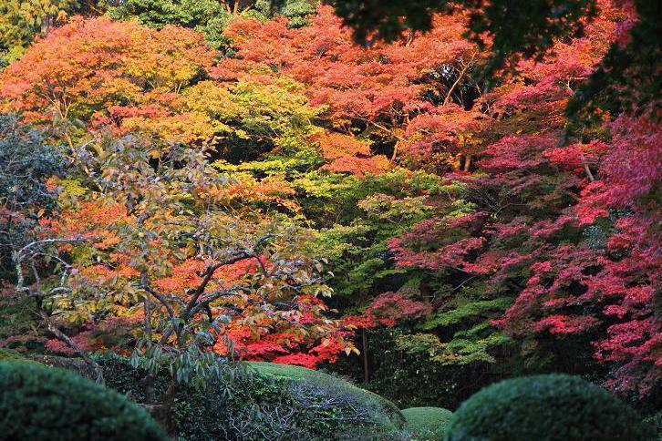 2012.11.12・『 詩仙堂 』京都 03