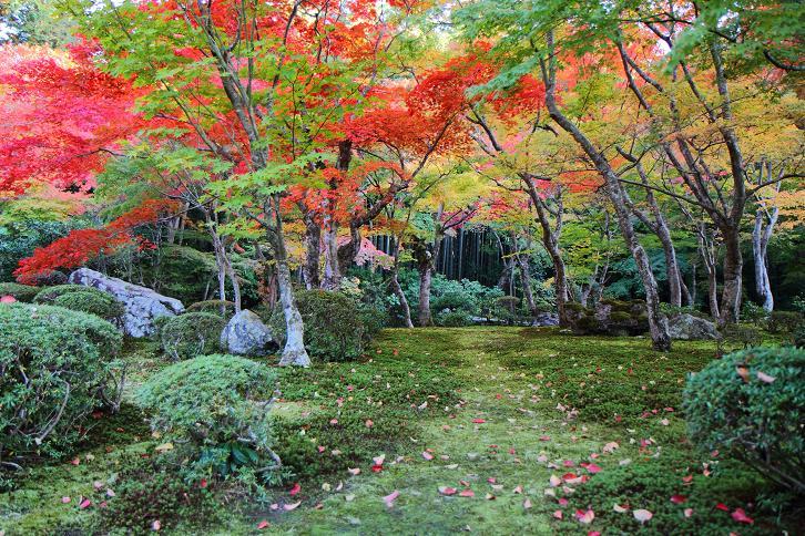 2012.11.12・『 圓光寺 』京都 01