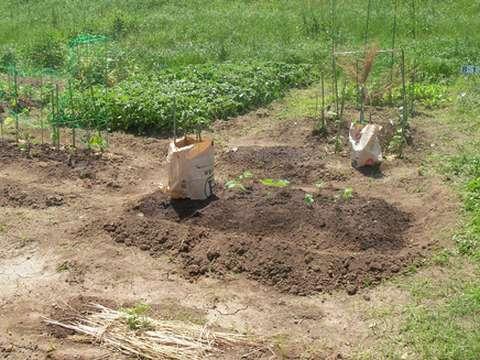 120513_農園1