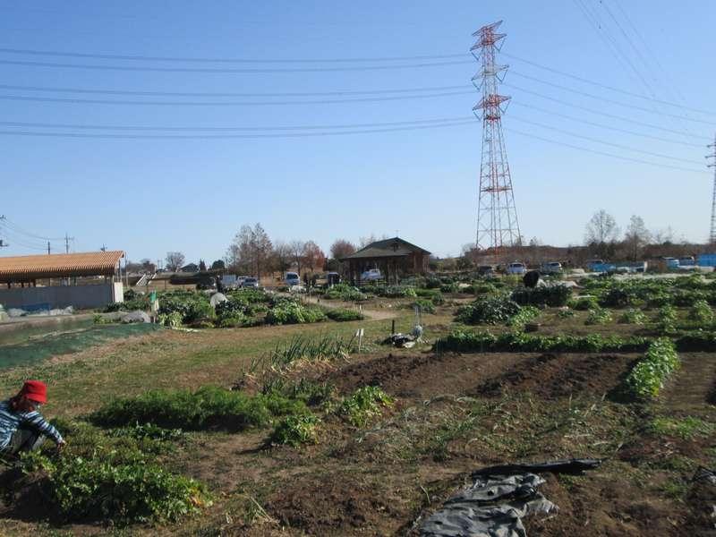 1216農園1