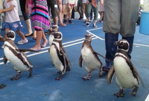 ペンギン歩行