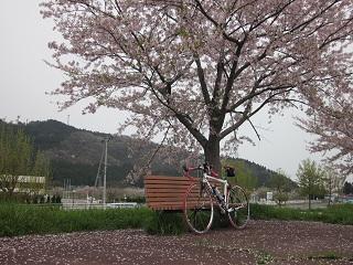 一目千本桜_1