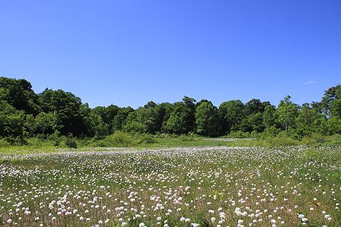駒止湿原6月26日014