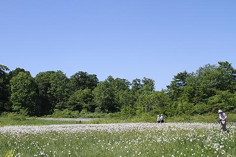 駒止湿原6月26日011