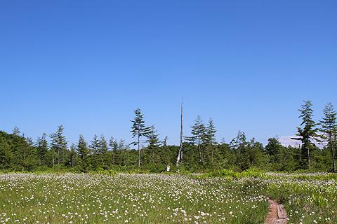 駒止湿原6月26日019