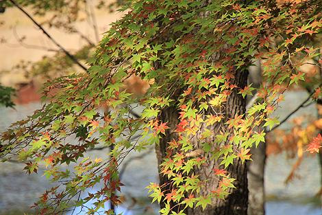 2012 10 20_2012 10 20 観音沼&日暮の滝_7917