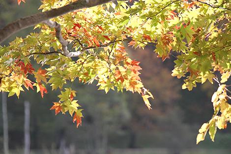 2012 10 20_2012 10 20 観音沼&日暮の滝_7891
