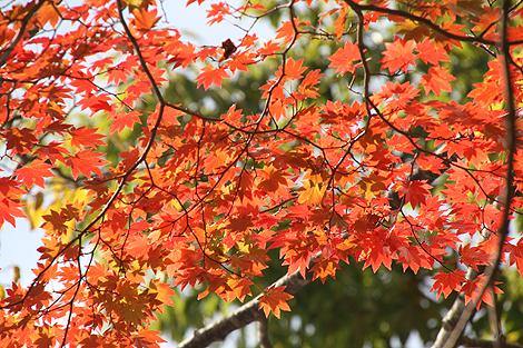 2012 10 20_2012 10 20 観音沼&日暮の滝_7878