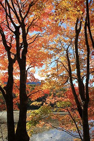 観音沼森林公園 10 25 036