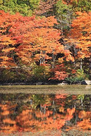 観音沼森林公園 10 25 038