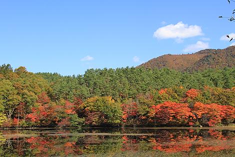観音沼森林公園 10 25 039