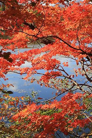観音沼森林公園 10 25 030