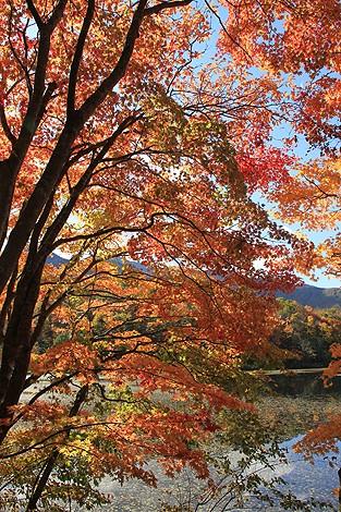 観音沼森林公園 10 25 033