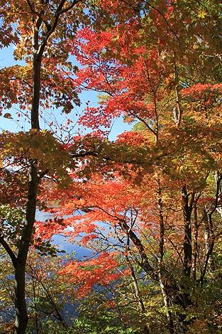 観音沼森林公園 10 25 031