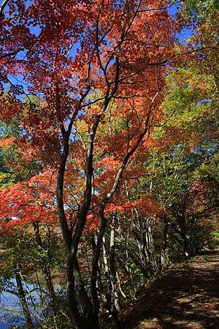 観音沼森林公園 10 25 026