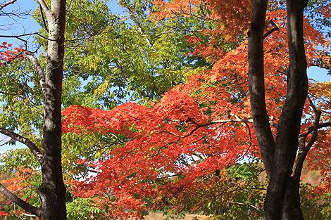 観音沼森林公園 10 25 025