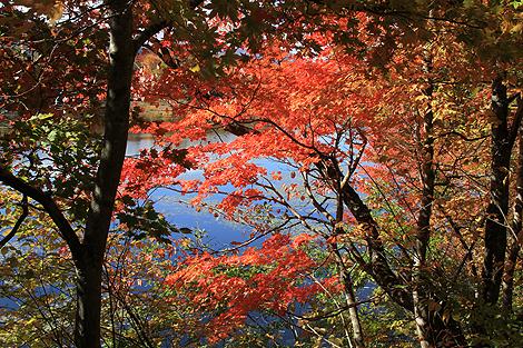 観音沼森林公園 10 25 029