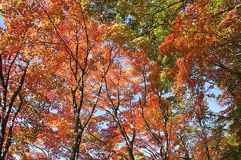 観音沼森林公園 10 25 020
