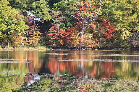 観音沼森林公園 10 25 005