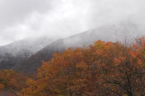 観音沼森林公園の雪紅葉006