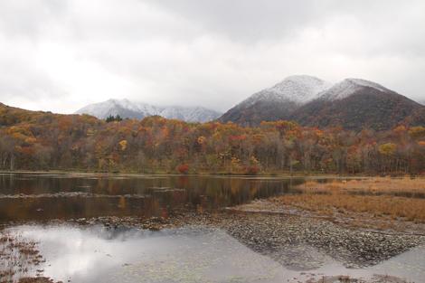 観音沼森林公園の雪紅葉011