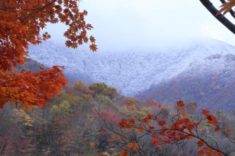 観音沼森林公園の雪紅葉017
