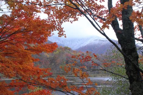 観音沼森林公園の雪紅葉018