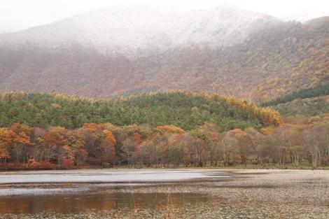 観音沼森林公園の雪紅葉019