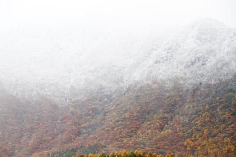 観音沼森林公園の雪紅葉020