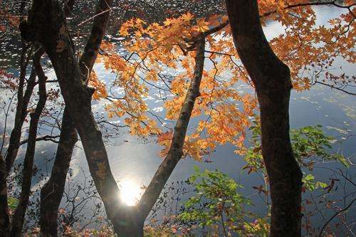 観音沼森林公園 10 29 001