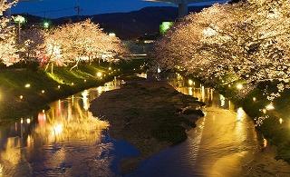 玉造温泉夜桜