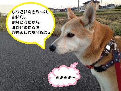 1_2013110821363222d.jpg