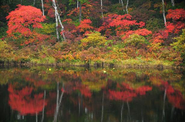 琵琶池のナナカマド