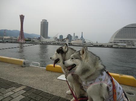 神戸接待12