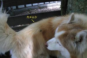 20120624_kiyosato (46)