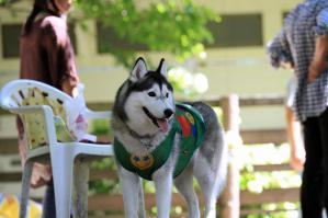 wan_wan_terrace_20120825 (46)