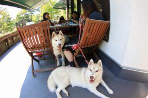wan_wan_terrace3_20120825 (8)