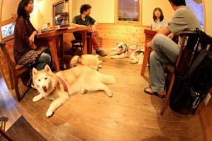 wan_wan_terrace4_20120825 (24)