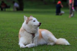 asagiri_20120916 (8)