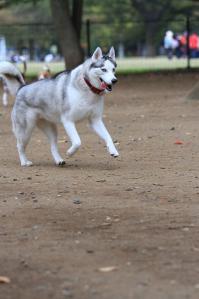 yoyogi_20121028_1 (6)