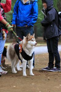yoyogi_20121028_1 (30)